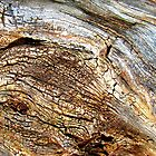 Antique Bark by Kathie Nichols