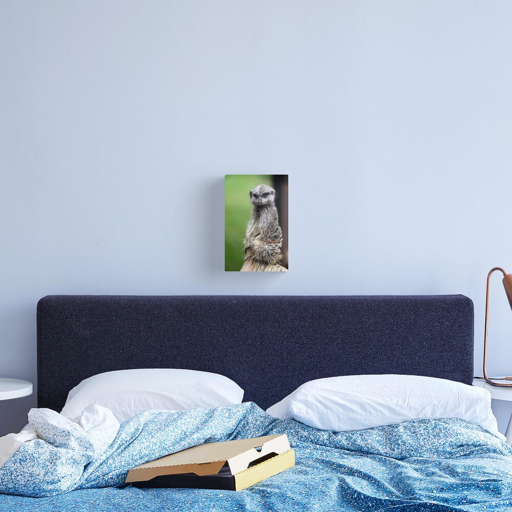 The Wily Meerkat Canvas Print