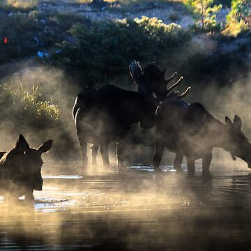 Foggy Morning with Moose by valentina9