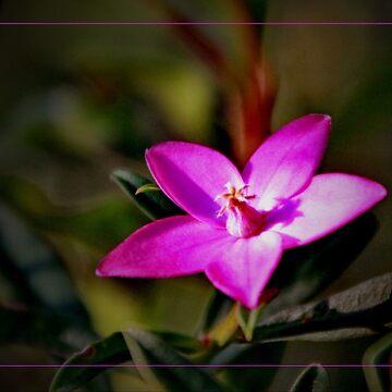 Little pink flower by AlexDu
