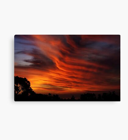 My Backyard Canvas Print