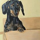 Doxie in Boxy by Marcella Chapman