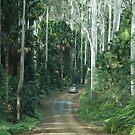 Wallingat State Forest Drive NSW Australia by Phil Woodman