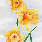 Welsh Daffodils Watercolour by chrissyturley