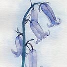 Bluebells watercolour by chrissyturley