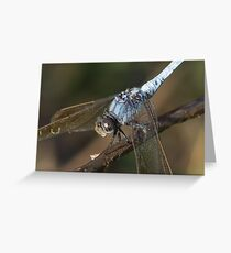 Blue Skimmer Portrait Greeting Card