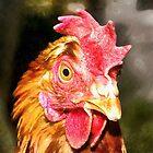 Chicken Head Portrait by heidiannemorris