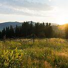 Fragrant Mountain Meadows - by Georgia Mizuleva