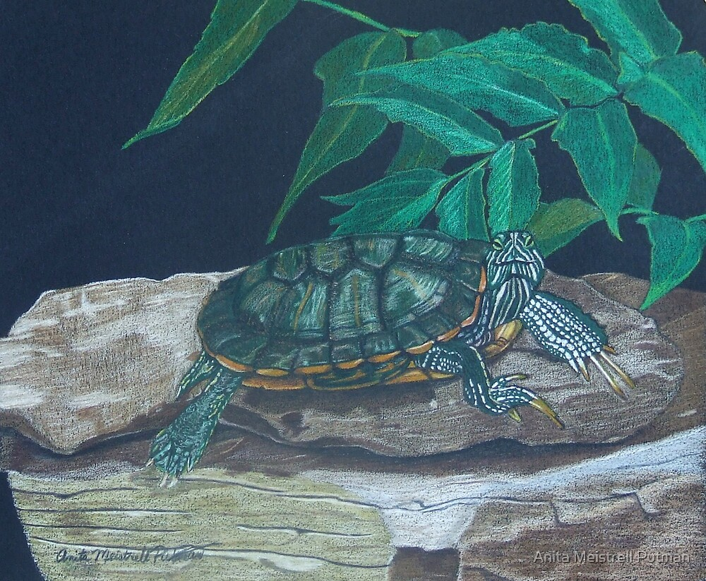 Catching Some Rays by Anita Meistrell Putman