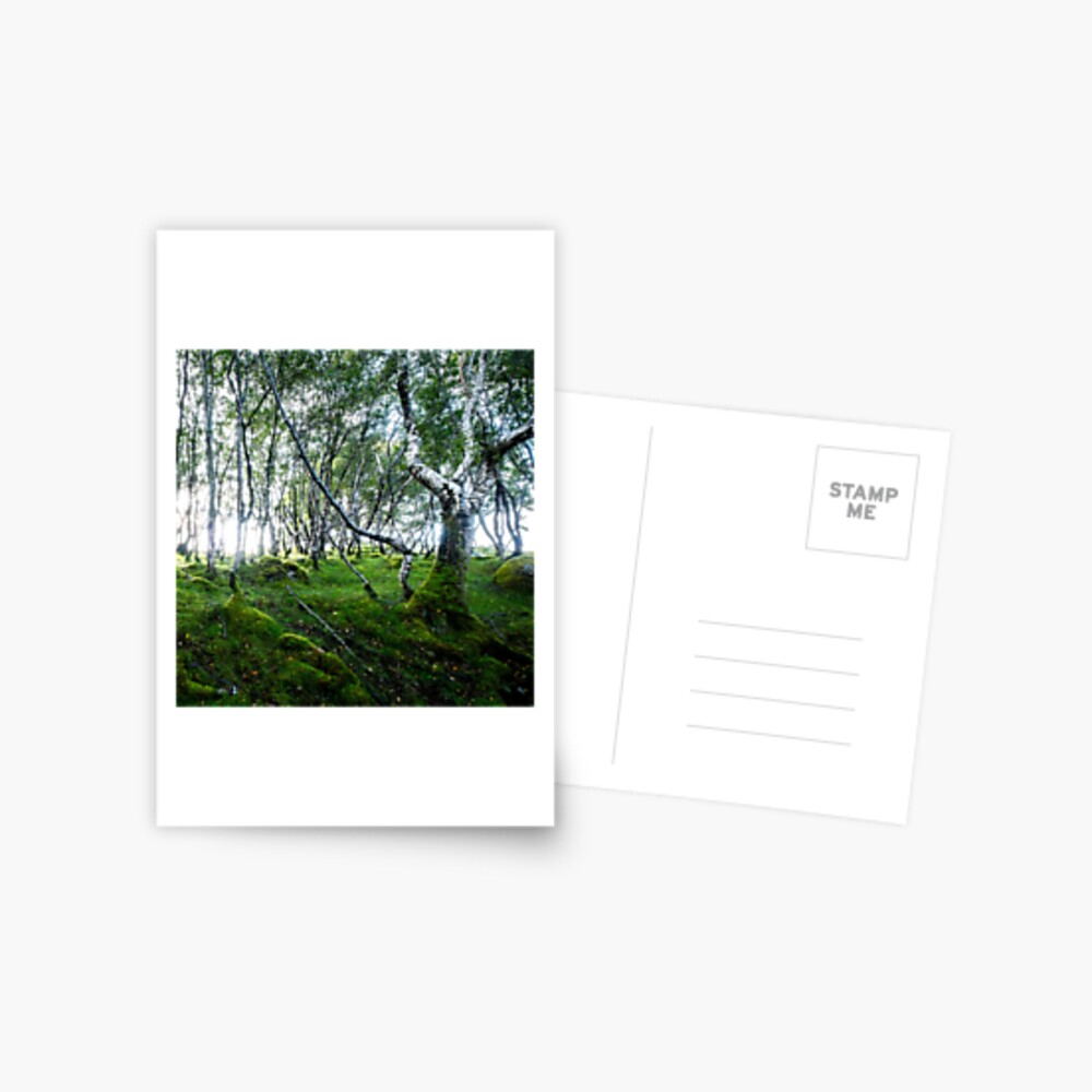 Carte postale « Green Forest»