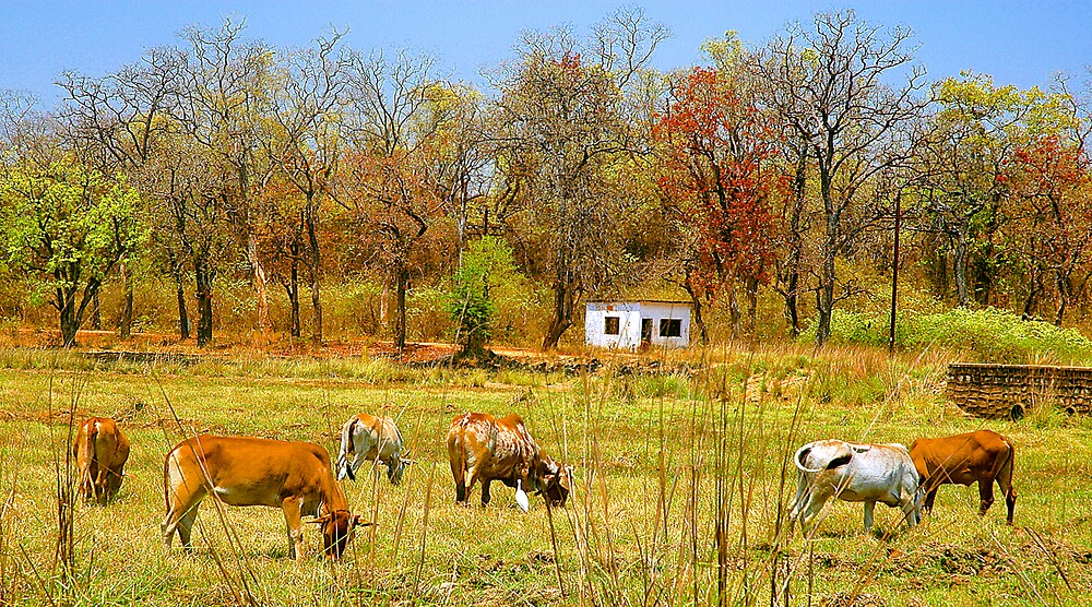 A Country View by Mukesh Srivastava