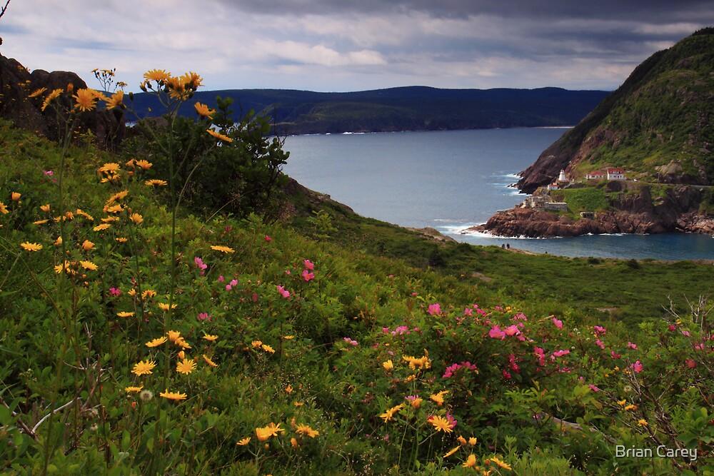Admiring Amherst by Brian Carey