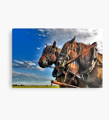 Belgian Horses Metal Print
