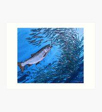 Chinook Salmon Art Print
