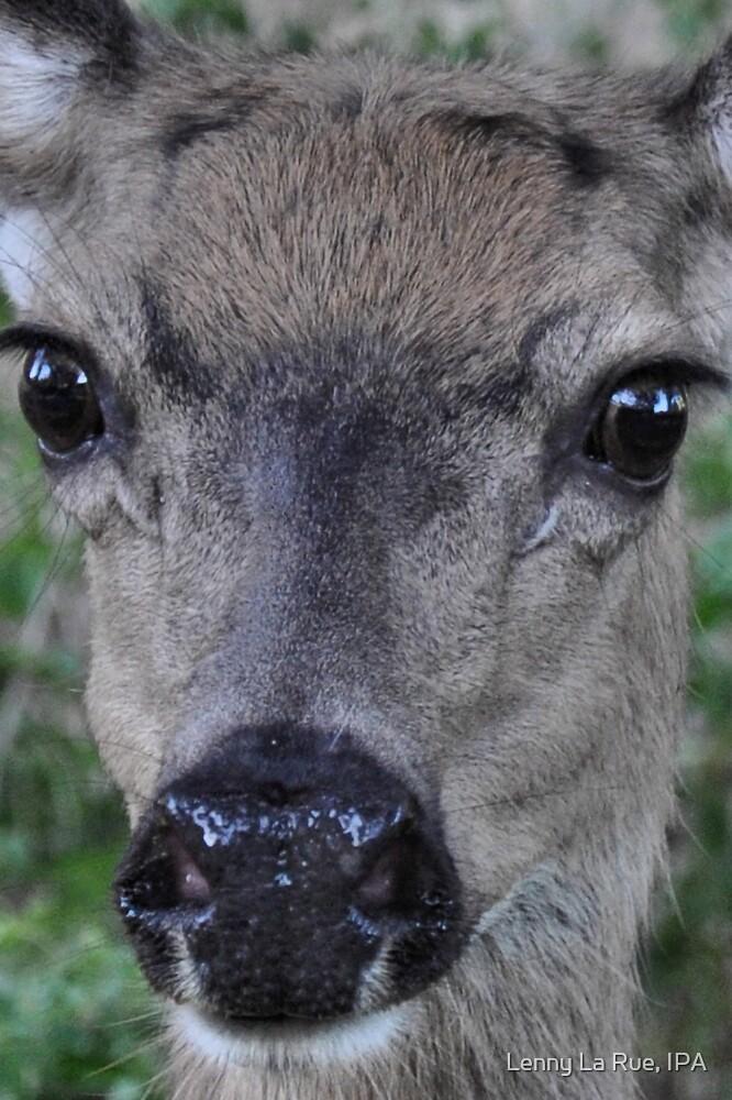 Eyes of a deer: face-to-deer face 2 by Lenny La Rue, IPA