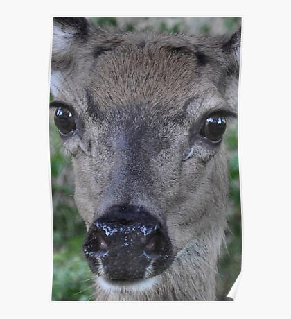 Eyes of a deer: face-to-deer face 2 Poster