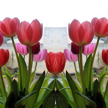 tulips by Snofpix