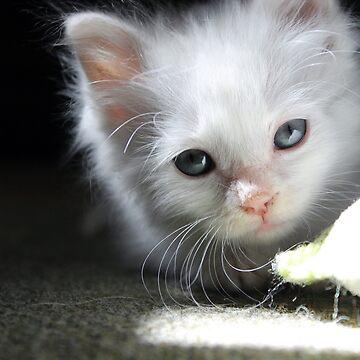 Kitten by Snofpix