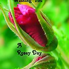 Rosey Day--Card..  Buds by MaeBelle