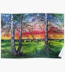 Summer Sunset Over the Meadow and Birch Trees Poster