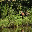 Horses Grazing by the Creek by Donna Ridgway