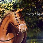 Christmas - Badet Arabian Mare by DiamondR