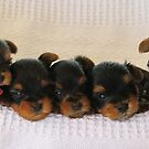 Tara's Pups by jackitec