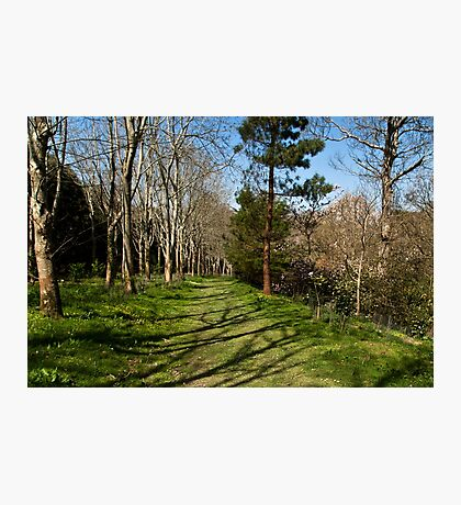 Green Path  Photographic Print