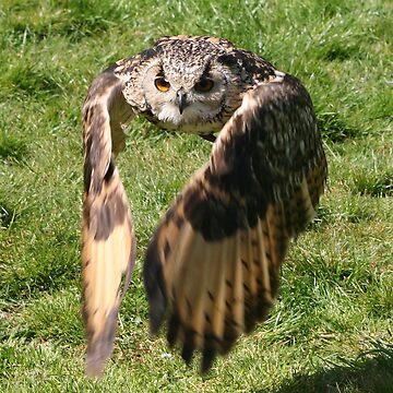 Flap Your Wings by JohnDalkin