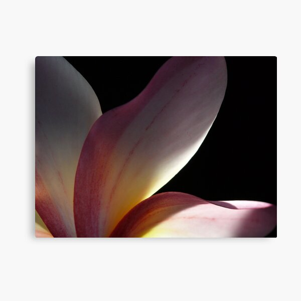 Behind the petals Canvas Print