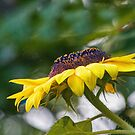 Sunflower by Eileen McVey