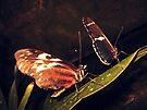 Butterfly Dance by schizomania
