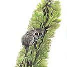 Hello from the Mouse Lemur in the spiny forest by Joel Borgerson