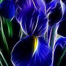 Iris by margotk