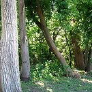 Tree Trunks  by Linda Miller Gesualdo
