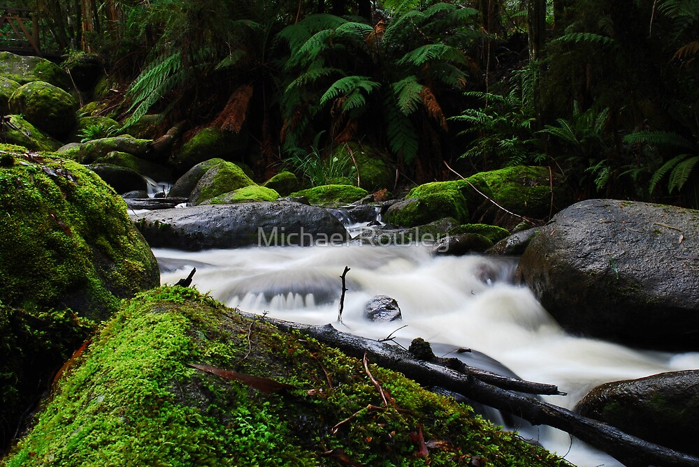 Toorongo River by Michael Rowley