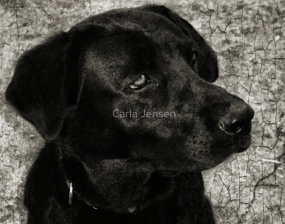 No Wait ....This Is My Best Side! by Carla Jensen