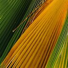 Palm Fronds by Werner Padarin