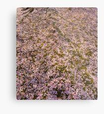 Snowing Sakura Petals in Spring Metal Print