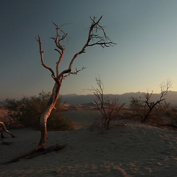 Tree at Mesquite Flat Sand Dunes by DanielOwens