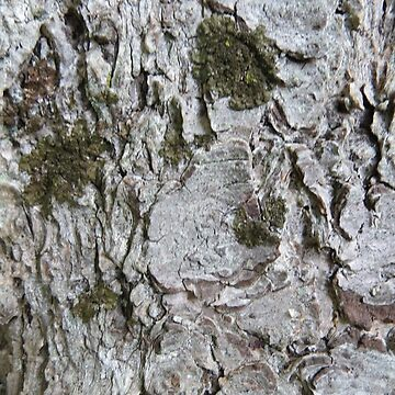Natural Tree Bark Moss Texture Photography  by SharkaSplat