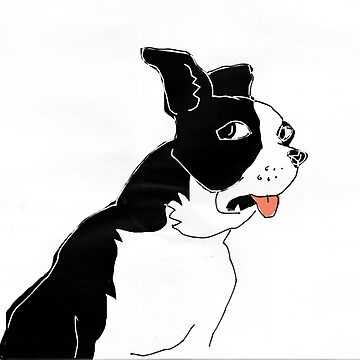 Boston terrier by mmawson