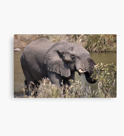 JUST... CHILLING OUT! Canvas Print