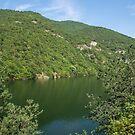 Crisp Green Summer - Mountain Lake Framed by Pines by Georgia Mizuleva
