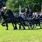 Friesian Horses in Action by ienemien