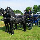 Friesian Horses  by ienemien