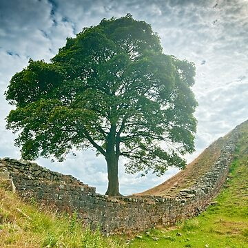 Sycamore Gap, Hadrians Wall by stephenknowles
