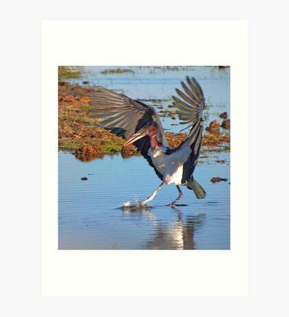 Marabou Stork, Chobe National Park, Botswana, Africa Art Print