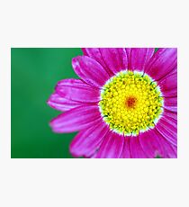 pink flower floral pattern Photographic Print