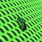 Green wasp by Jennymartin84